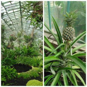 Serre plantes exotiques