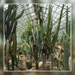 Serre des Cactus et Succulentes