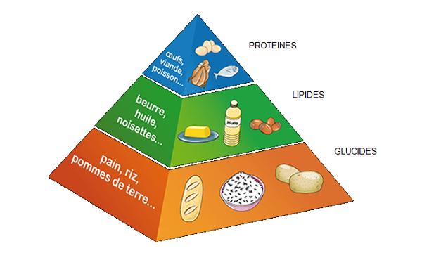 Nutriments : glucides, lipides et protéines