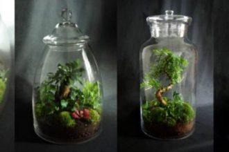 terrarium1 330x220 - Faire soi même un terrarium végétal