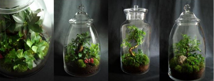 terrarium1 - Faire soi même un terrarium végétal