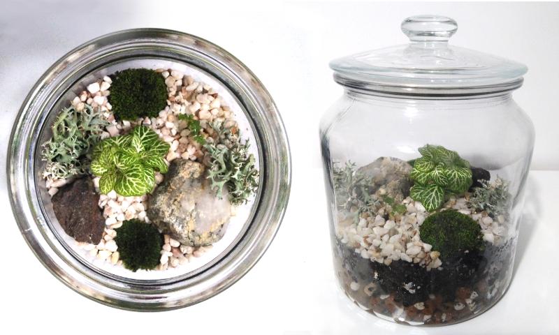 Terrarium végétal terminé