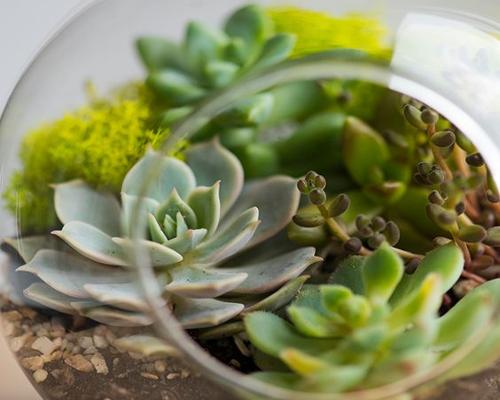 Terrarium végétal ouvert