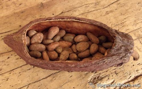Cabosse cacao - Chocolat Chapon - L'excellence du Chocolat