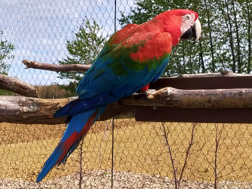 Parrot World Perroquet - Parrot World - Mon avis sur ce parc animalier immersif